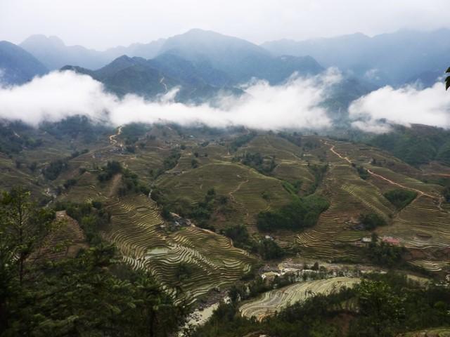 rice-terrasse-vietnam