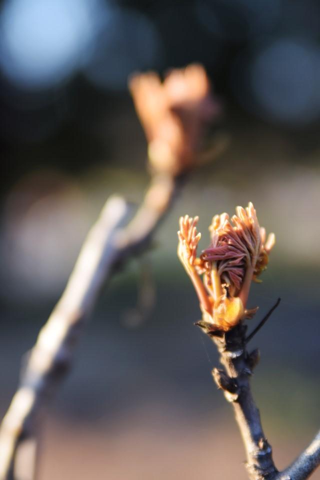 Fast aufgegangene Blüte Makrofotografie