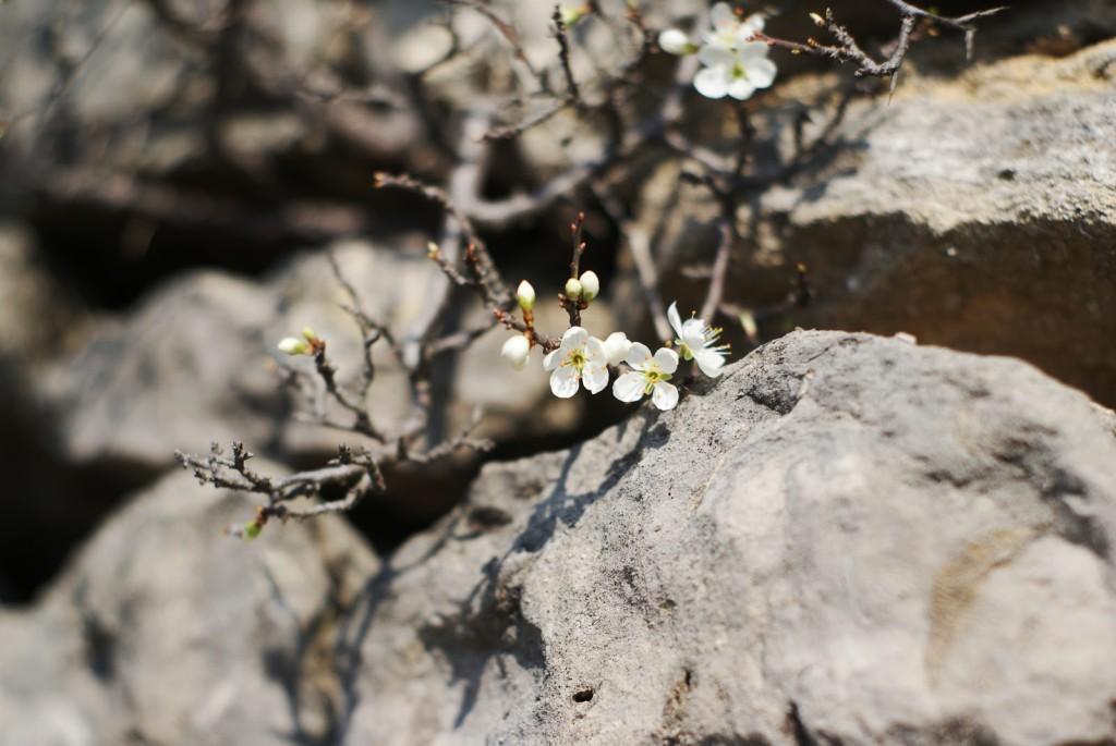 frei verwendbare Fotos Blumen Freebies