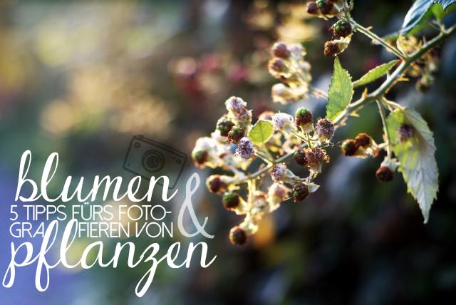 Tipps zum Fotografieren von Blumen und Pflanzen