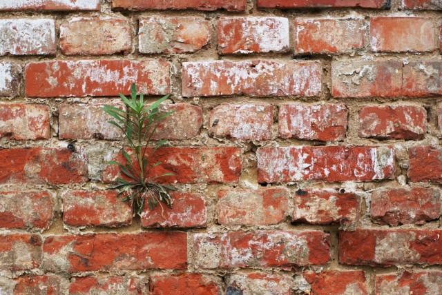 Grüne Pflanze auf roter Wand