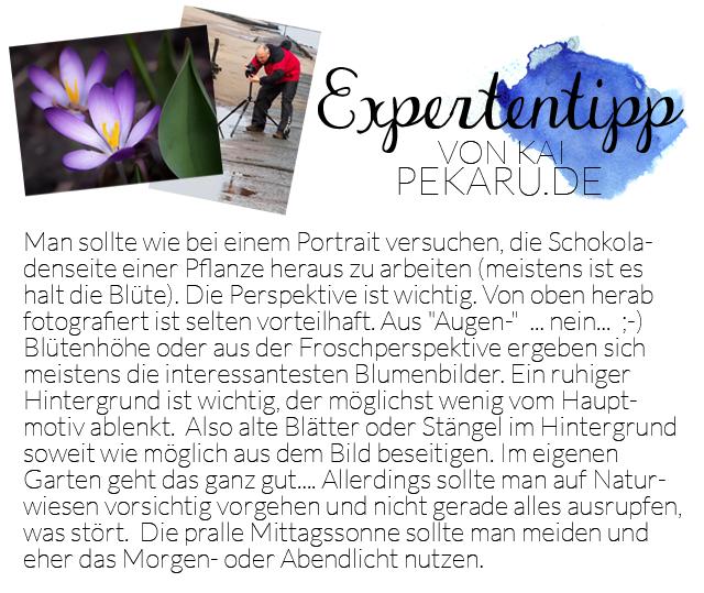 Expertentipp bildsprache pekaru.de