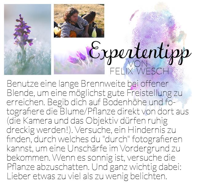 Expertentipp bildsprache Felix Wesch