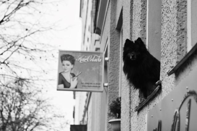 Hund Fenster Neukölln Berlin