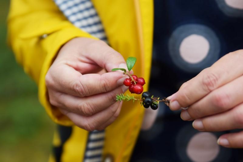 wild food finnland
